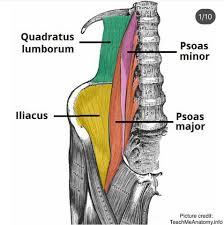 Keď to tréner prestrelí afyzioterapeut podcení - hyperaktívny m. quadratus lumborum utlmil m. iliacus a spôsobil bolesť v oblasti slabiny.