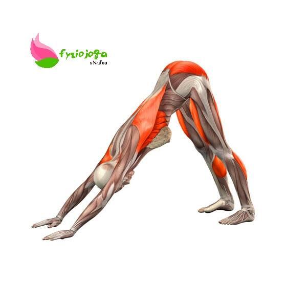 Bolesť chrbtice- spojenie fyzioterapie, jógy a silového tréningu